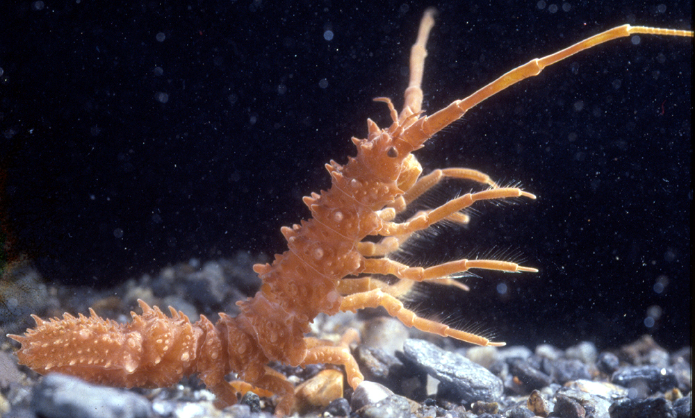 marine animals in antarctica adaptations