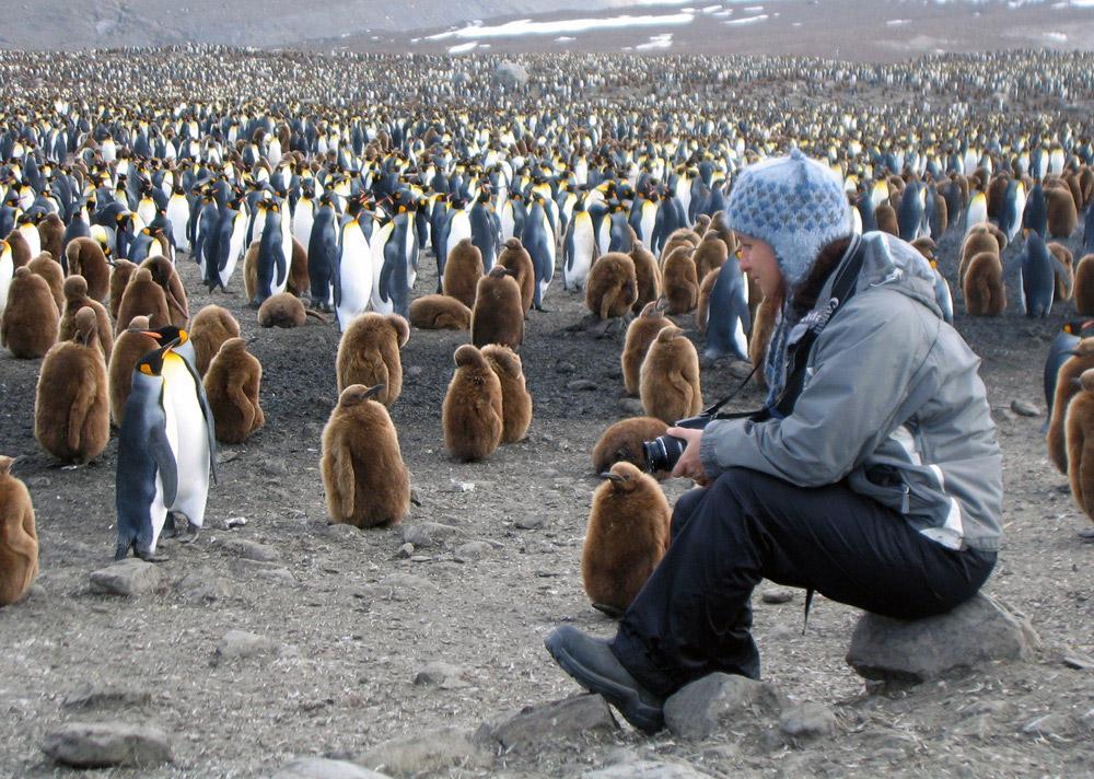 adelie penguin nest