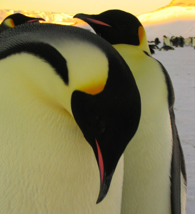 We'll help you find the best Antarctic vacaction for who you are