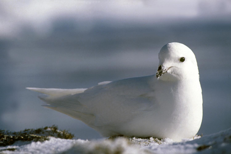 птицы антарктиды с названиями всех остальных