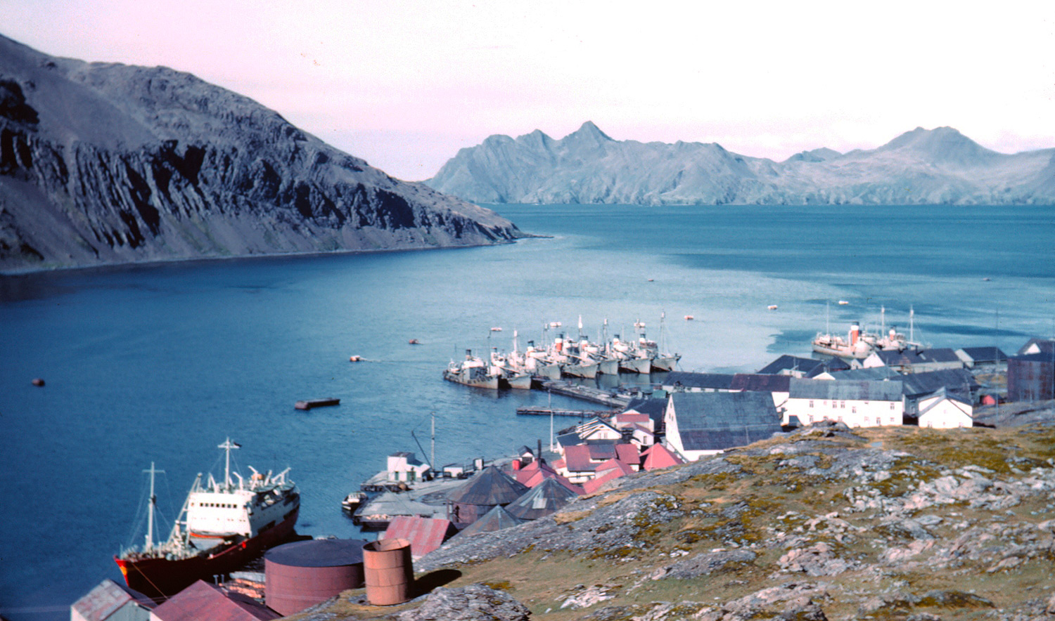 Fleet of whaling chase vessels at Leith Harbour - South Georgia. Photo courtesy NOAA