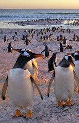 trips that include antarctica